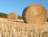 September 14 2003: Making Hay...