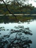 September 20: Henley Park Lake