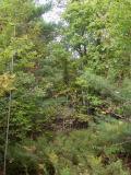 CATA-forest.jpg