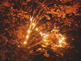 maple lights