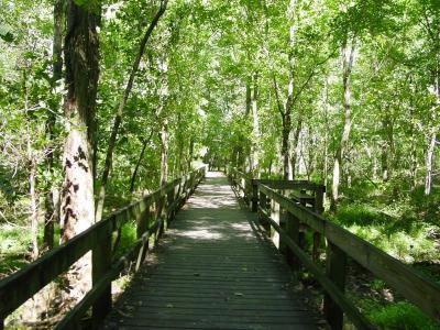 Radnor Lake Nature Trail