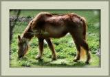 Fuzzy Horse