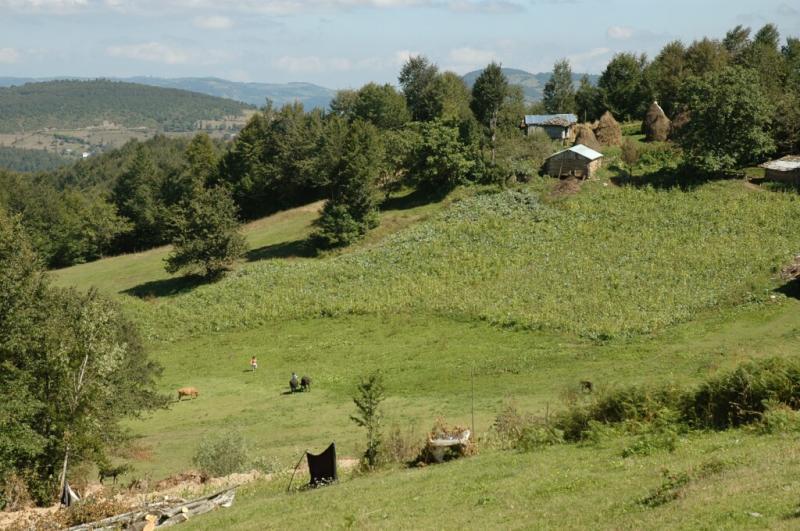 Akkus walk in the country
