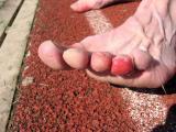 Bite sandals bite