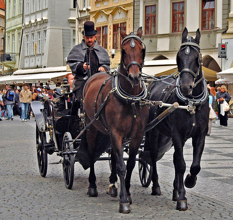 Tourist transportation