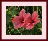Flower #13