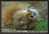 Have a break, have a kitkat:)