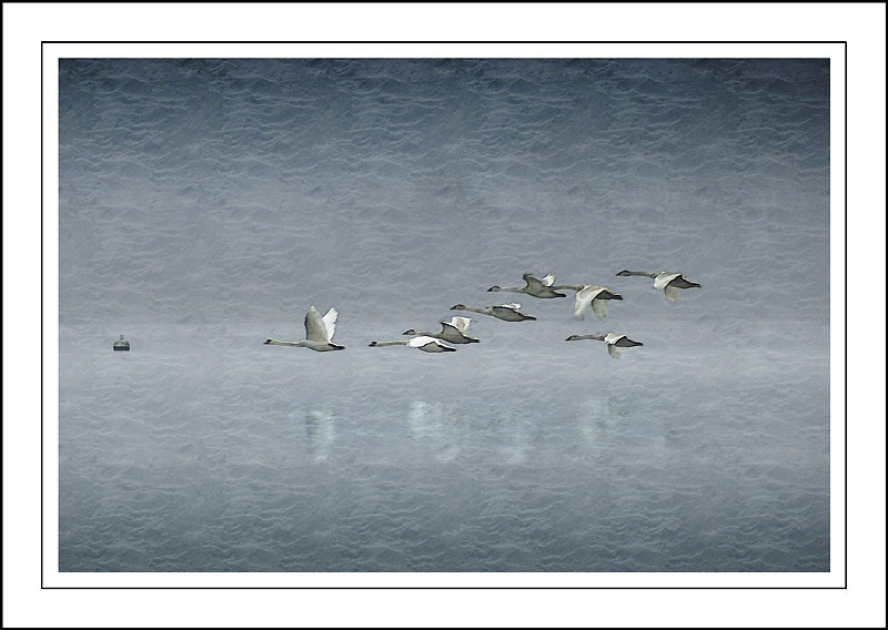 The family outing ~ Chew Valley lake