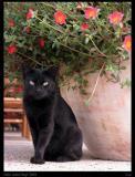 CAT P9120736.jpg