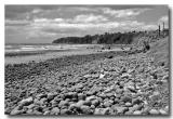 Stony Beach - Bay of Plenty