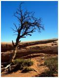 Dead (?) Tree