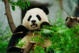 Pandas                                 ¤jºµ¿ß