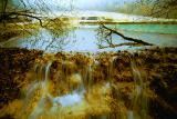 Potted Landscape Pools ¡i¬Ö´º¦À¡j
