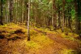 Virgin forest ì©l´ËªL