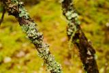 Full of moss and lichens aÄöZ±K