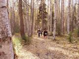 Mile 5 - UAF Ski Trails