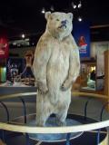 Grizzly_UAF_University of Alaska Museum