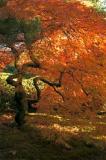 Color-1.jpg