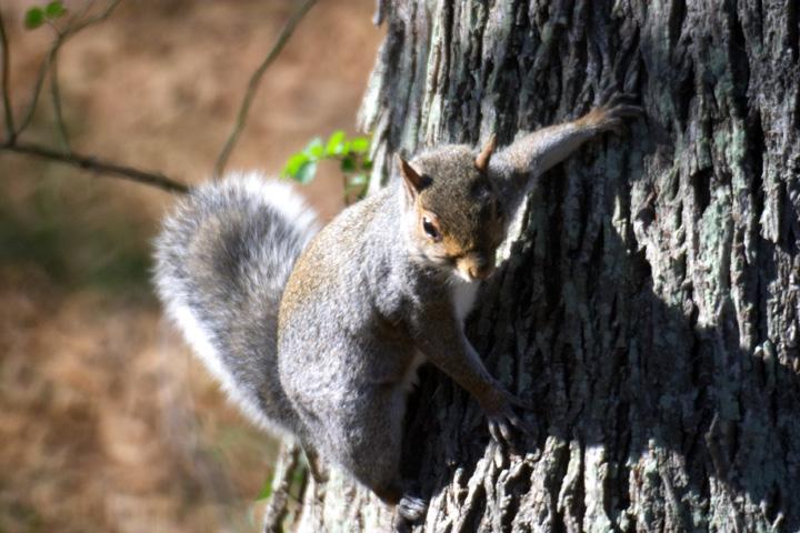 Squirrel.jpg