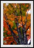 Autumn's Majesty