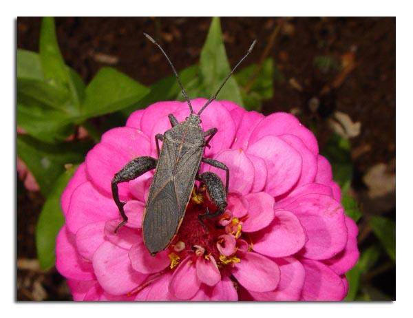 Plant Bug.jpg