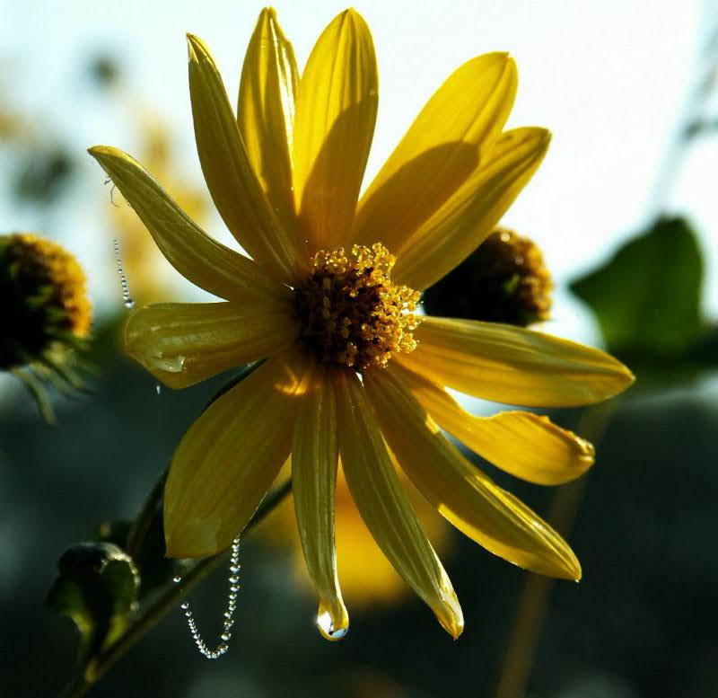 flowers0005.JPG