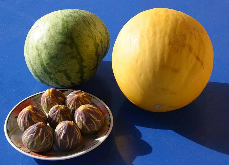 Southern Fruits