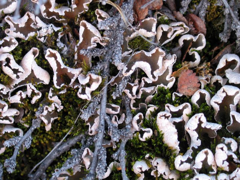 lichens_1559.jpg