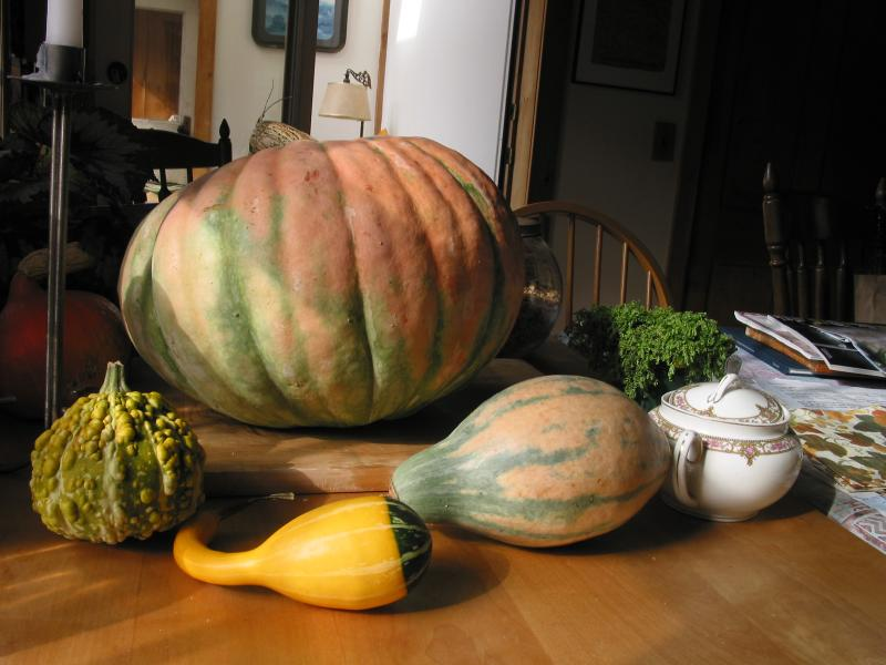 Pumpkins from my garden