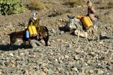Donkey's and riders, Yemen