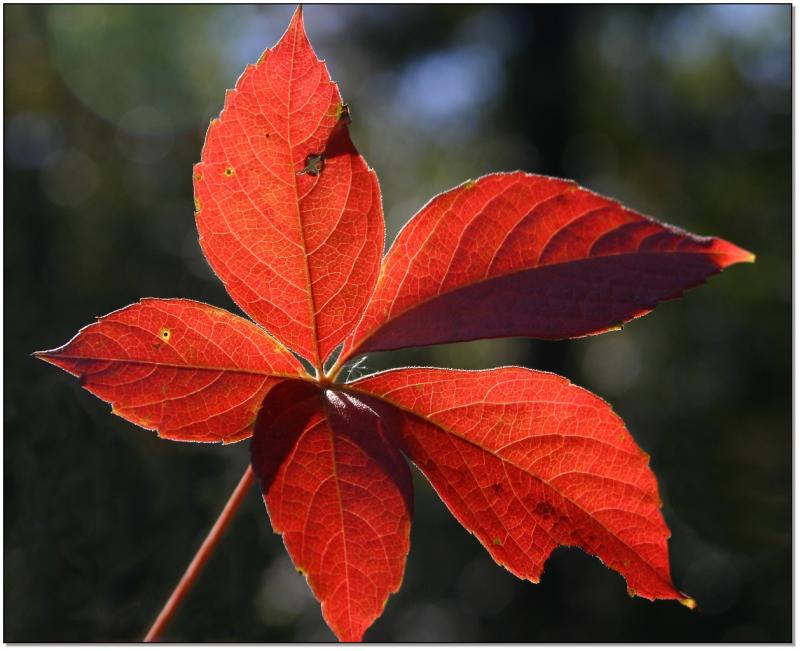 leaf with character