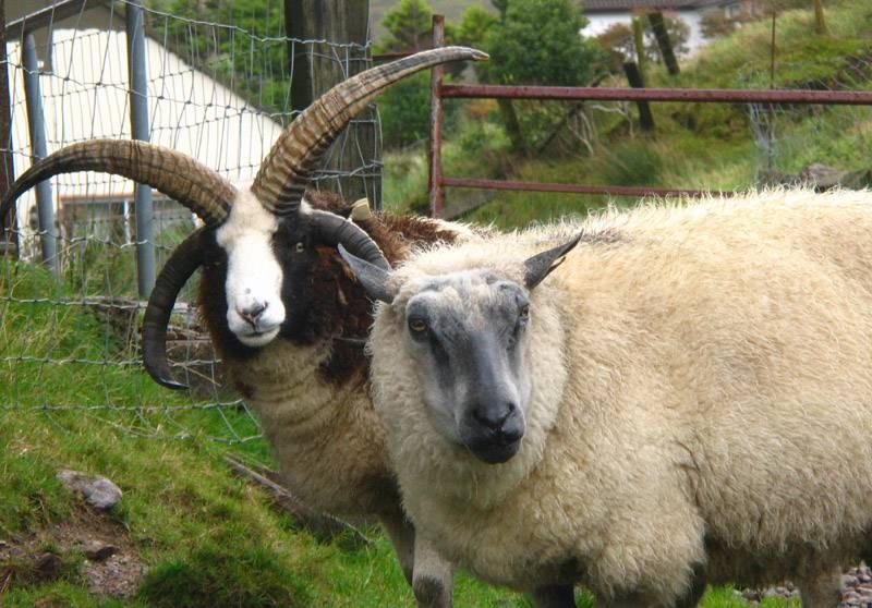 Many horns