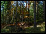 ..a short walk trough autumn....