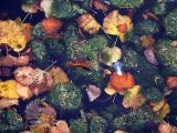 October 25 2003: Fallen & Floating