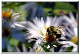 Leave me Bee*   by midmadn