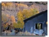 Ruins and Aspens at the Chemung Mine