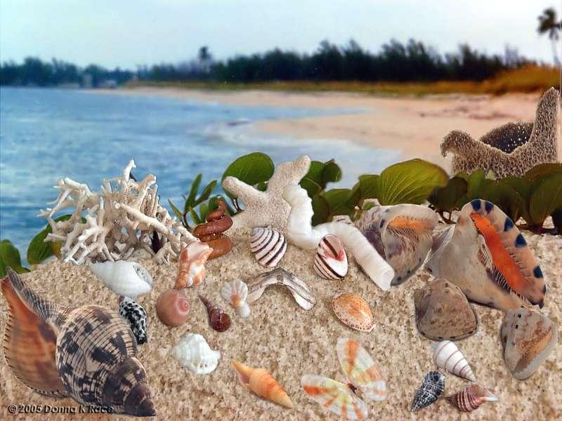 <b>South Bimini Beach