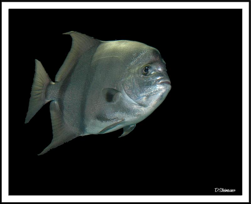 Fish (!)