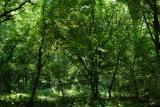 Forest, 192 megapixels