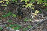 Red Eye Squirrel