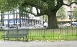 The Tree where Van Gogh Slept ?