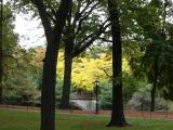 Fall Foliage  -  Central Park West & 70th Street