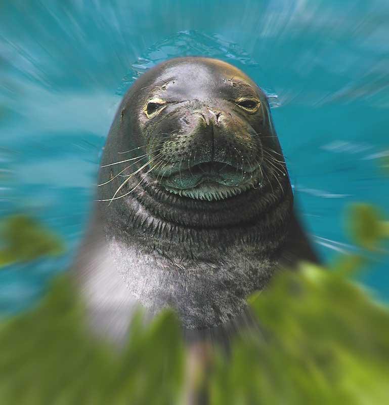 Hauty Seal