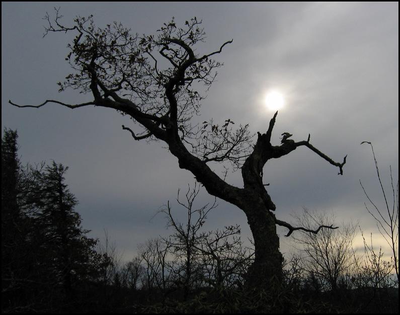 Tree on Blue Ridge Parkway - Listen!