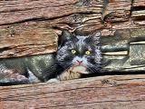 Hidden Kat #1