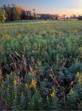 Prairie-at-Sunset.jpg