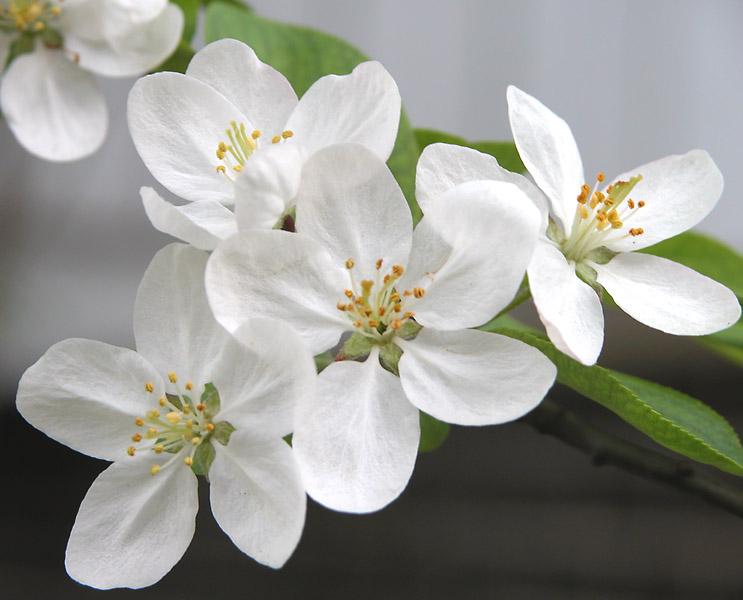 Springbloom.jpg