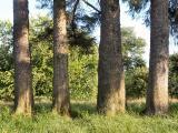 040712 Trees Of Memories