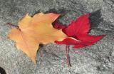 Two-Leaves.jpg