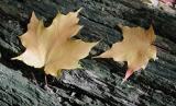 Leaves2.jpg